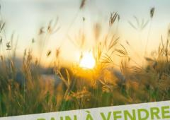 Terrains à vendre à Nieul sur Mer, la Rochelle | Villa Tradition